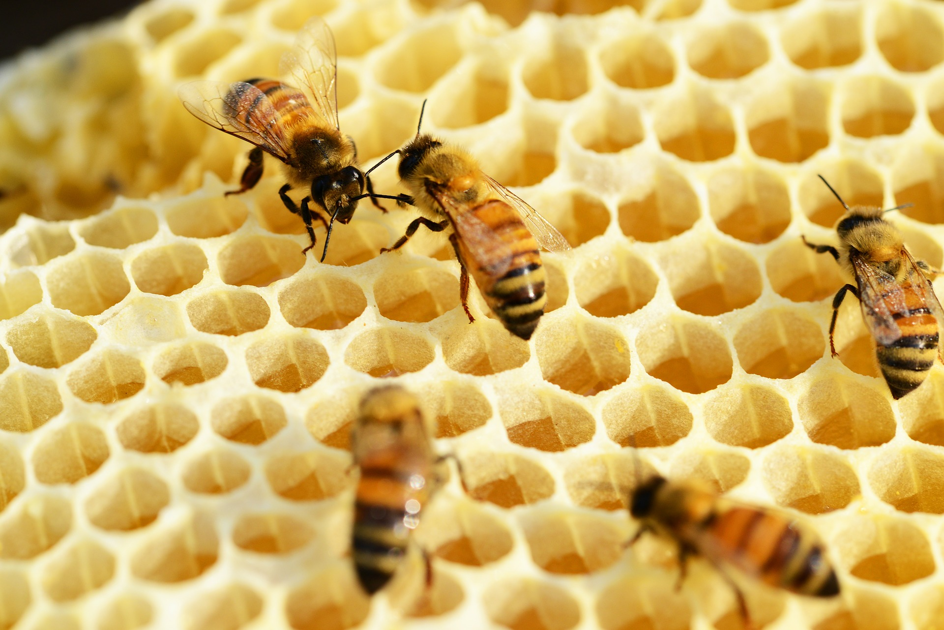 What is a honey trap?